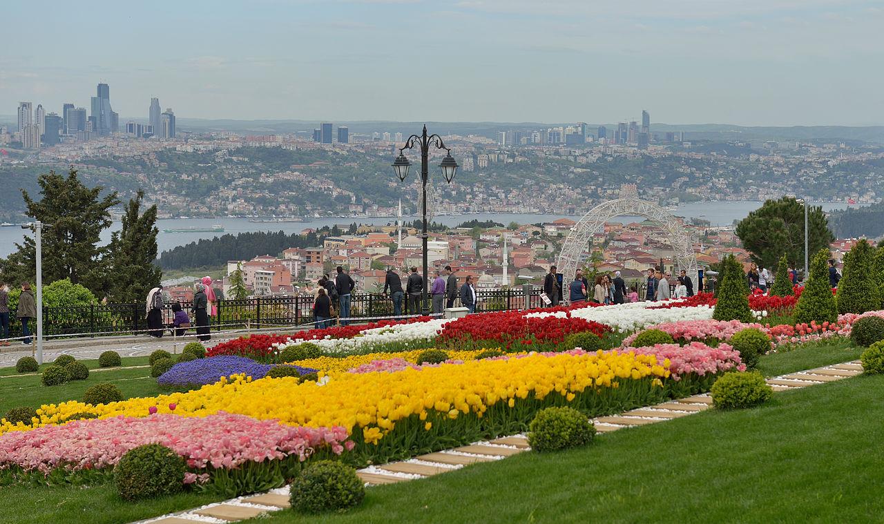 Tulips_Istanbul.jpg