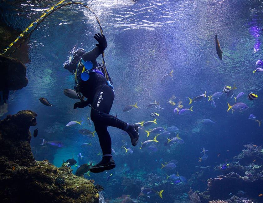 diving-2-min.jpg