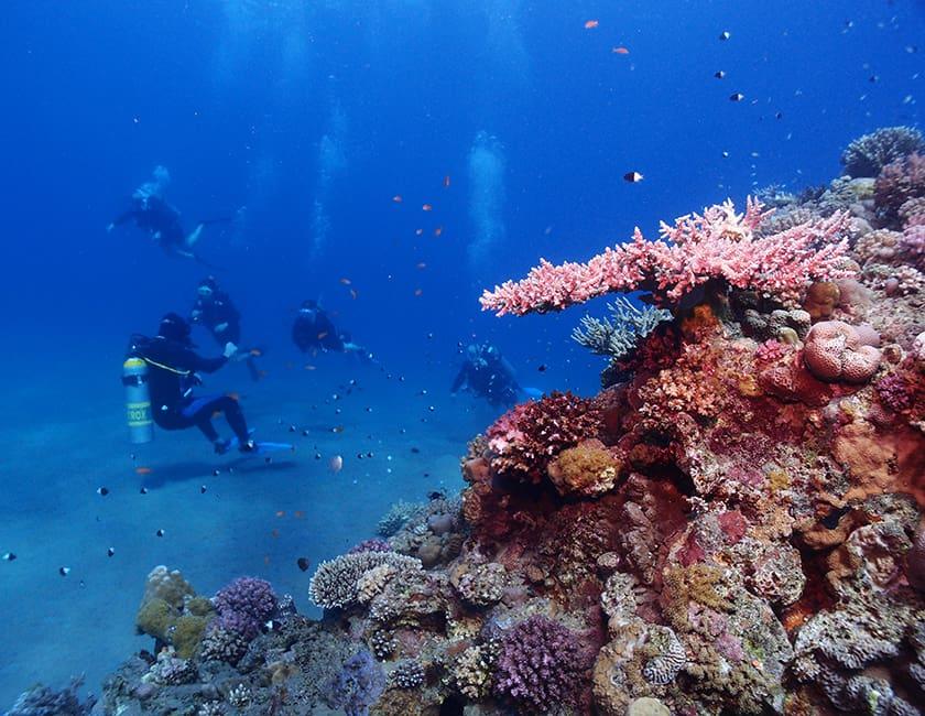 diving-egypt-7-min.jpg