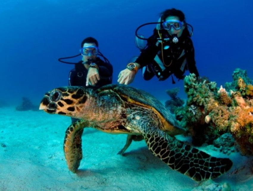 diving-in-maldives-03-2.jpg