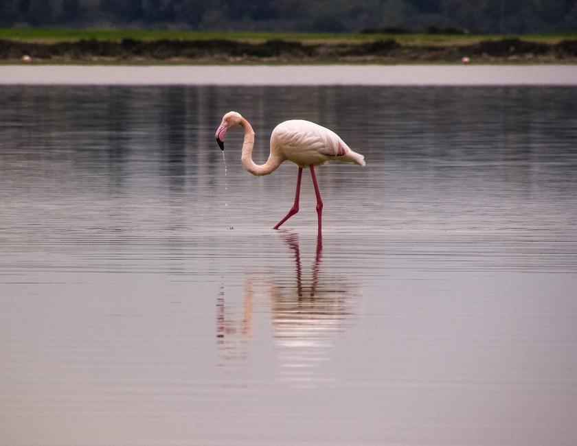 flamingo-min.jpg
