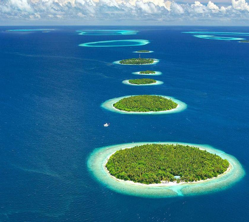 maldivy3.jpg