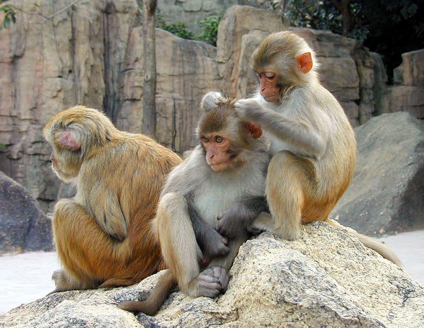 monkeys-on-hainan-min.jpg