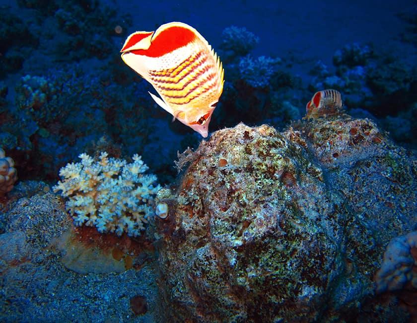 red-sea-min.jpg