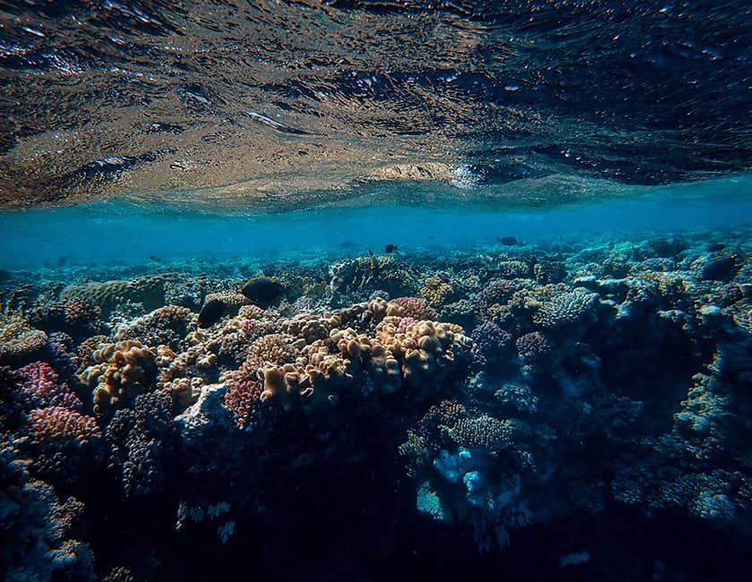 under-water-min.jpg